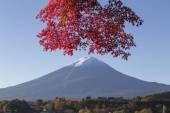 Foglie di acero cambiano colore autunno al mt. Fuji, Giappone — Foto Stock