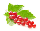 红醋栗和绿色的树叶 — 图库照片