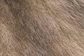 Mink fur background — Stock Photo