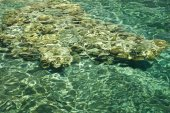 Stones in clear waters — Foto de Stock
