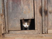 Who's there? Guard cat at the ready — Stock Photo