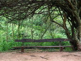 Bench in the jungle — Stock Photo