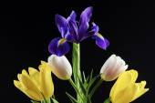 Tulips and irises — Stock Photo