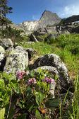 Badan in the mountains of the Western Sayan — Stock Photo