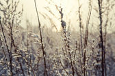 Winter flower snow frost ice field — Stock Photo