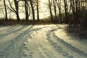 Winter road forest field landscape — Stockfoto