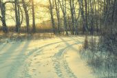 Winter road forest field landscape — Stock Photo