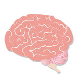 Brain on white background — Stock Vector