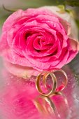 Gold wedding rings and rose — Stock Photo