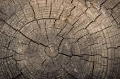 The texture of the tree, saw cut — Stock Photo