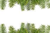 Kerstboom takken geïsoleerd op witte achtergrond — Stockfoto