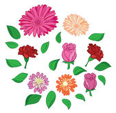 Set of vector flowers and leaves — Stock Vector
