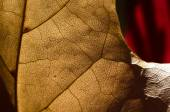 Nature Abstract - Epidermis Cells and Veins of a Dying Leaf — Stock Photo