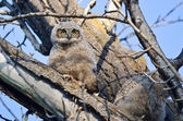 Cute Young Owlet Perched in a Tree — Стоковое фото