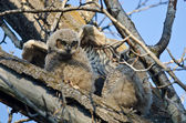 Cute Young Owlet Perched in a Tree — Stock Photo
