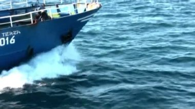 Common dolphins jumping close to a boat — Stock Video