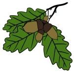 Oak leaves and acorns - autumn nature — Stock Vector #74353551