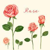 Vector Rose watercolor — Stock Vector