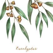 Watercolor eucalyptus leaves — Stock Vector