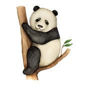 Panda — Stock vektor