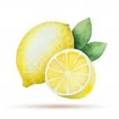 Watercolor lemon yellow — Vettoriale Stock