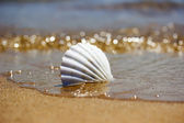White seashell on the sand near the water — Stok fotoğraf