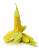 An ear of corn isolated on the white background — Foto de Stock