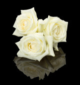 Three white bud roses on the black background — Foto de Stock
