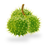 Green chestnuts isolated on the white background — Stok fotoğraf
