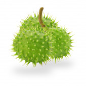 Green chestnuts isolated on the white background — Foto de Stock