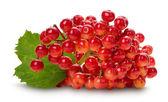 Red viburnum isolated on the white background — Foto de Stock