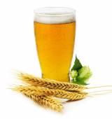 緑のホップと分離したオオムギの耳を持つ新鮮なビールのグラス — ストック写真