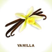 Vanilla pod isolated on white — Stock Vector