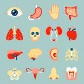 Conjunto de órganos humanos — Vector de stock