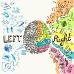 Brain hemispheres sketch — Stok Vektör #53324267