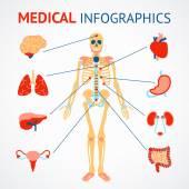 Human organs infographic — Stock Vector
