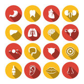 Human Organs Icons — Stock Vector