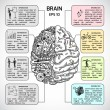 Brain hemispheres sketch infographic — Stock Vector #55348849