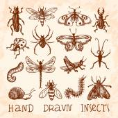 Insects sketch set — Stock Vector