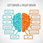 Brain hemispheres infographics — Stock Vector #57249195