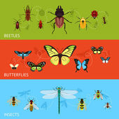 Insects banner set — Stock Vector