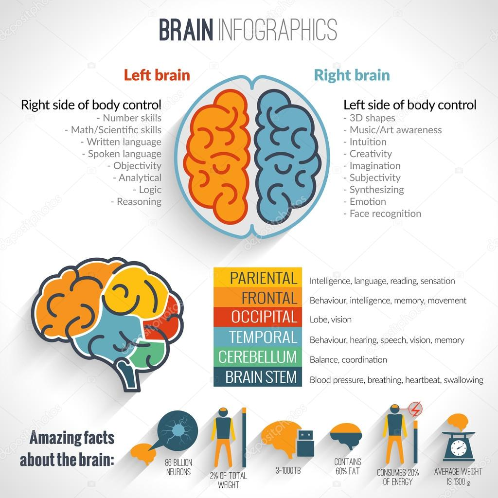 Infographic brain