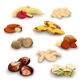 Nuts Decorative Set — Stock Vector