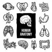Anatomy Icons Set — Stock Vector