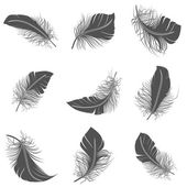 Feather Black Set — Stock Vector
