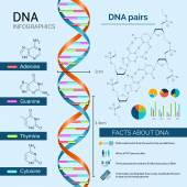 Dna Infographics Set — Stock Vector