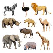 Wild African Animals Set — Stock Vector
