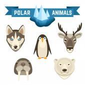 Polar Animals Set — Stock Vector