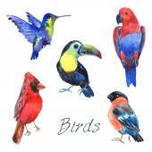 Exotic tropical birds watercolor icons set — Stock Vector
