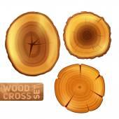 Wood Cross Section Set — Stock Vector
